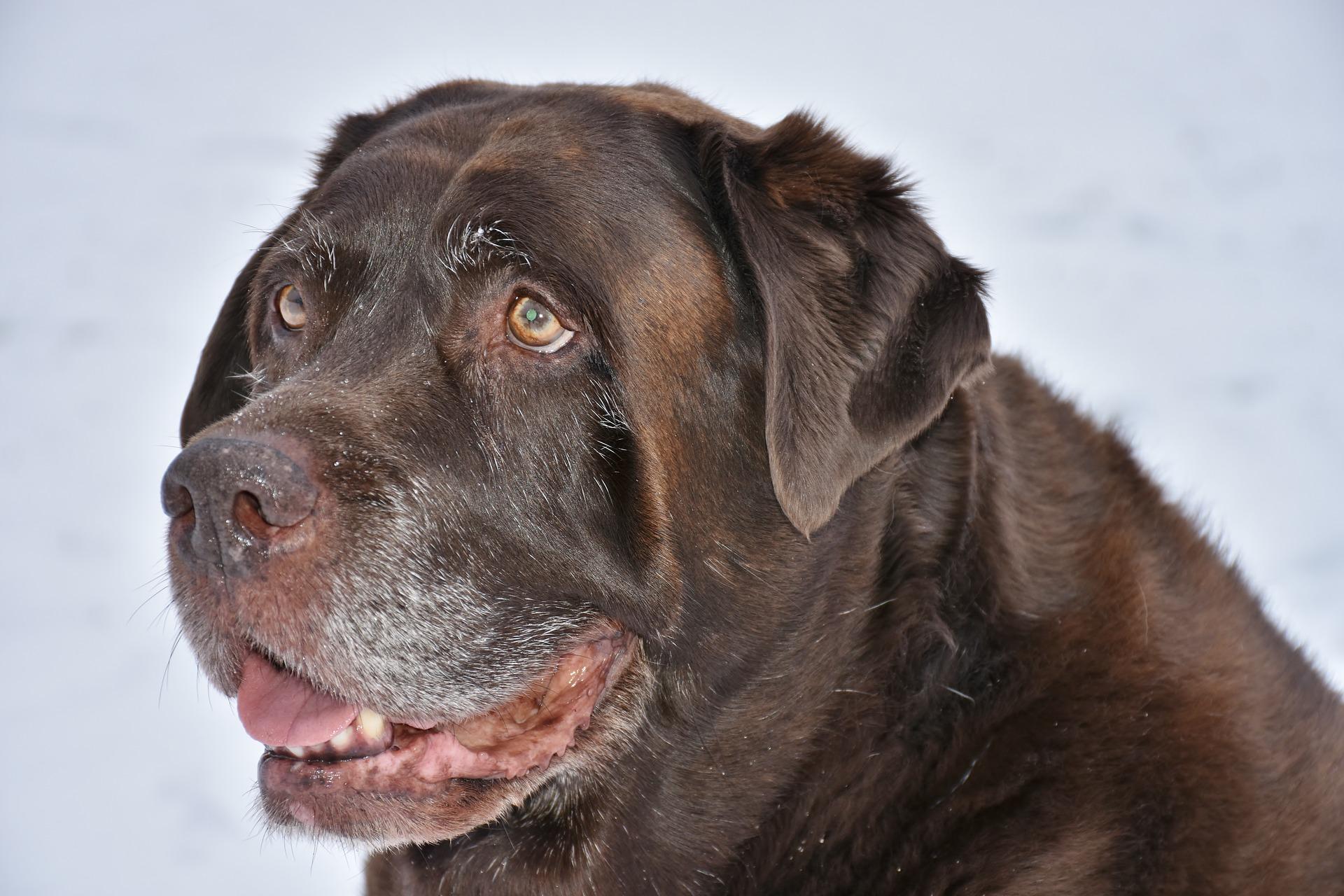 Reha Kurs für alte Hunde und Hunde mit H...